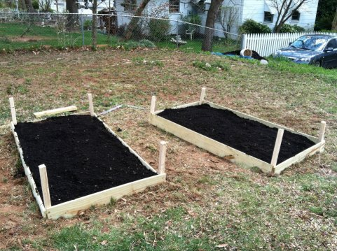 first raised bed
