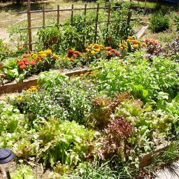 Raised Beds: A Small Garden Solution